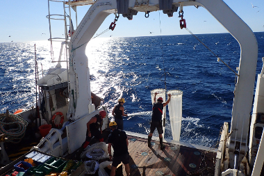 Communautés planctoniques marines