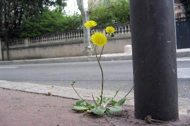 Dynamique des végétaux en milieu urbain