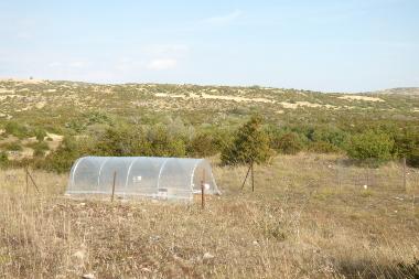 Dynamique de la végétation et climat